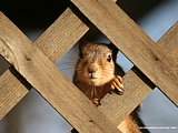 Widelife Chipmunks and Squirrels34 pics